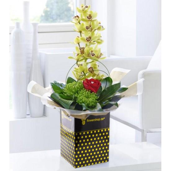 Selección de orquídeas
